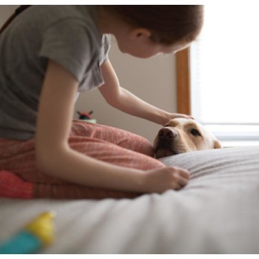little girl sits on bed with dog