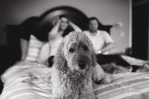 photobombed by a doodle while taking newborn photos in family bed